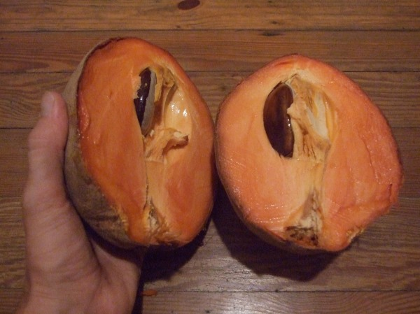 mamey cross-section