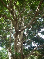 pilinut-structure
