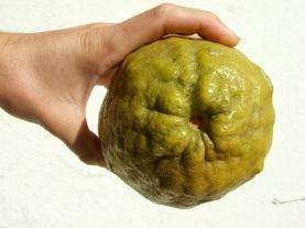 large-citrus-cross
