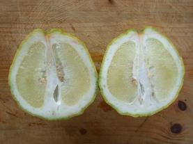large-citrus-cut