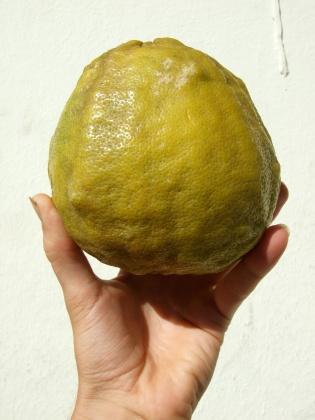 large-citrus