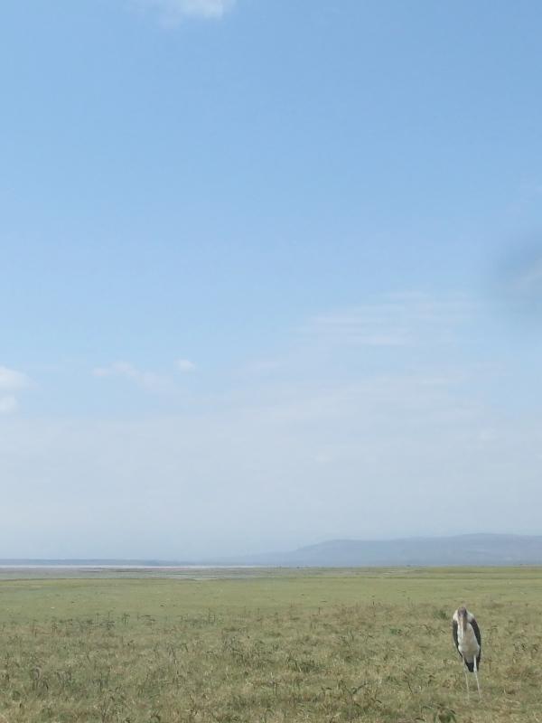 Large bird, Kenya