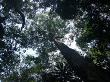 Kakamega