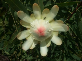 flower from hill in kenya