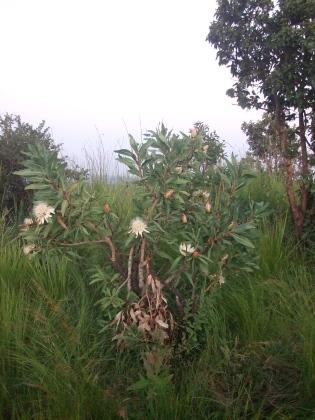 shrub from hill in kenya