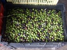 Olive press 4