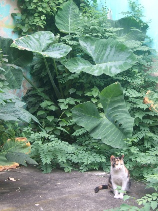 Vacant lot planting, with cat