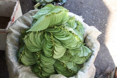 P. betel leaf