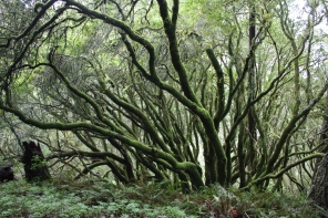 California bay forest