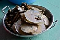 shellfish, vietnam