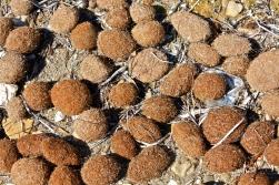 Seagrass balls, Kefalonia, Greece