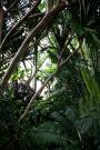 Boettcher conservatory, pandanus trunks