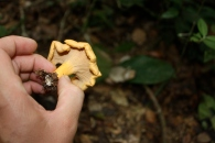 Edible fungi, Gabon