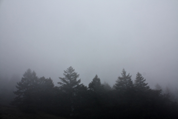Fog forest, Mt. Tam