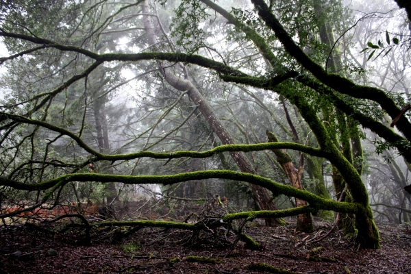 sideways tree, california