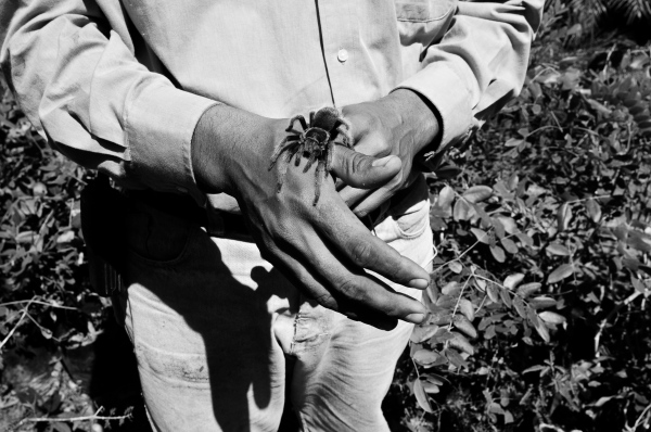Hand and spider, Mexico