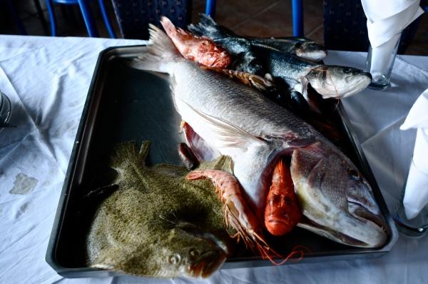Weird fish display, Montenegro