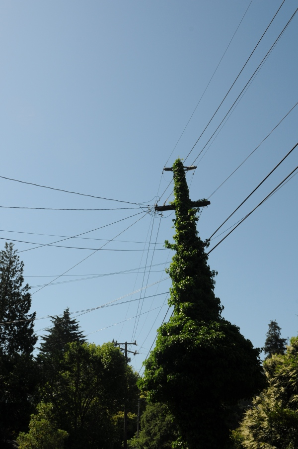 Green energy, vegetated telephone pole, berkeley, California