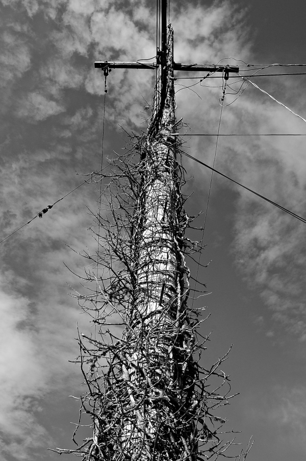 previously vegetated telephone pole