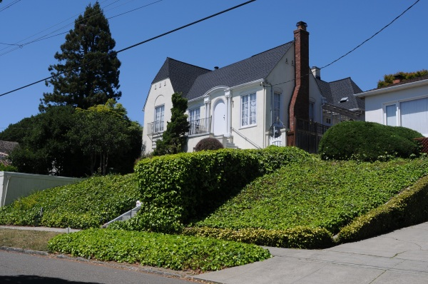 Ivy yard, Berkeley, California