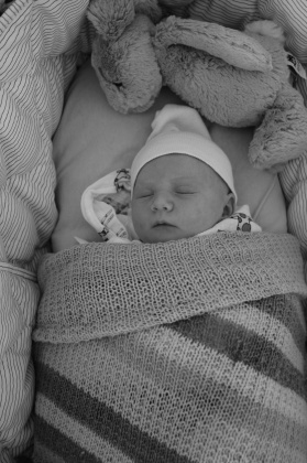 Tilia, a few days old