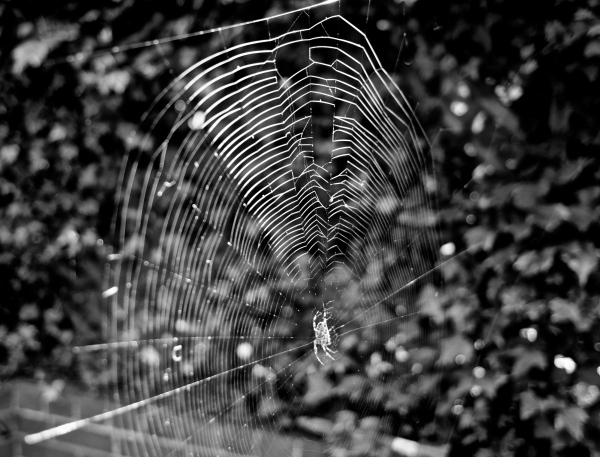 October spider web