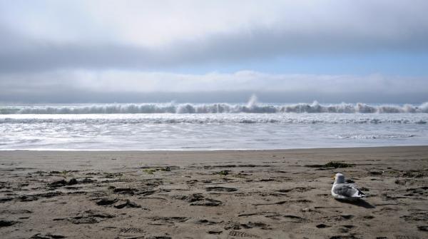 Seagull pondering ocean