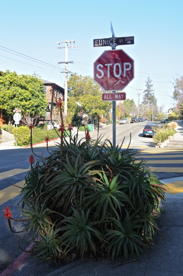 Aloe at Stopsign @ Eunice